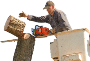 removing trees legally